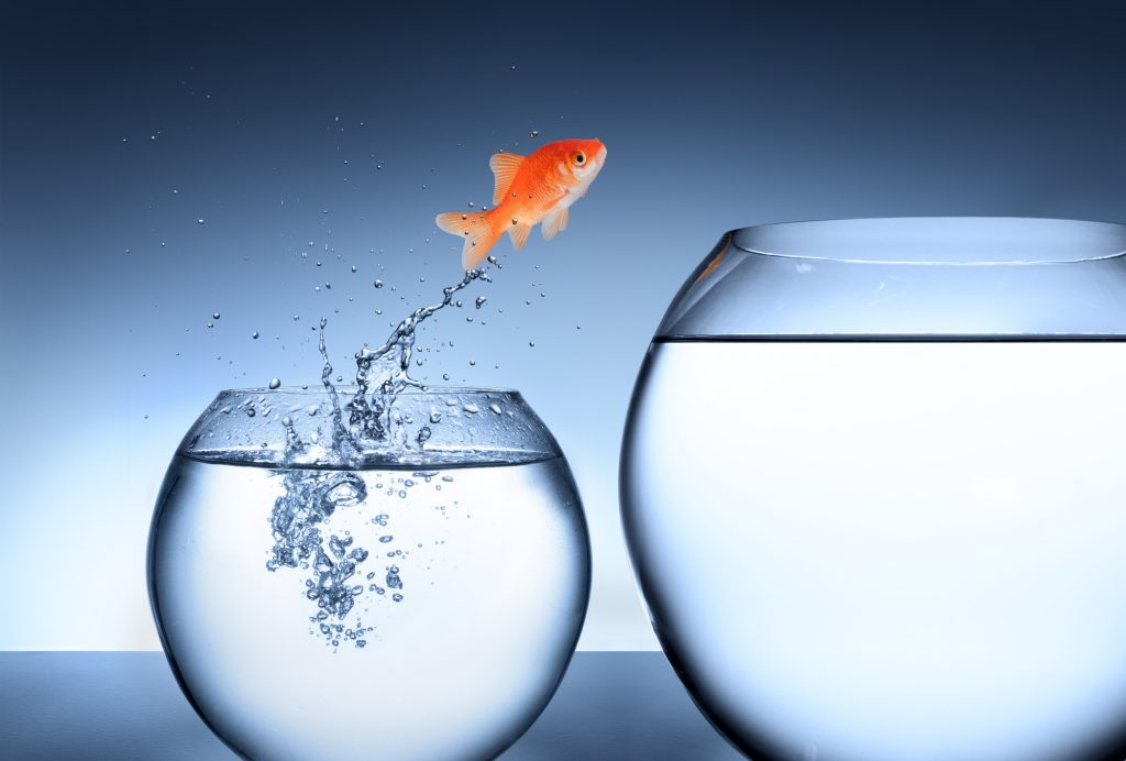 Fish jumping to bigger and better things - image courtesy of APS