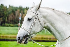 Equine industry's manufacturers are upping their game